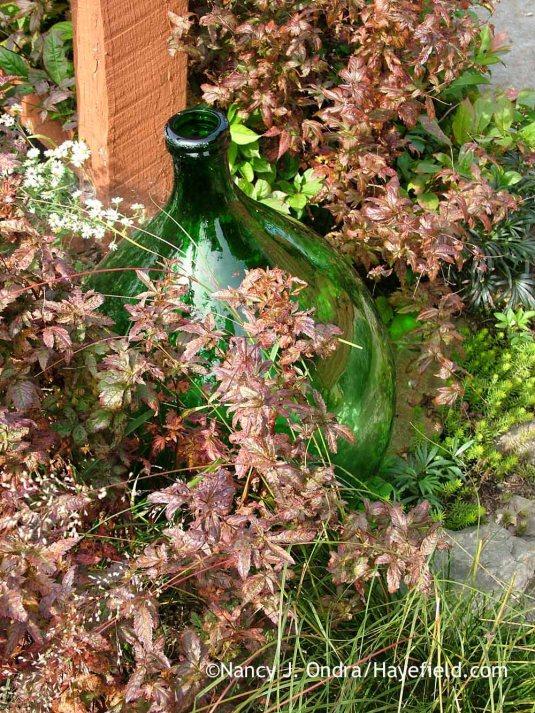 American ipecac (Porteranthus stipulatus) in fall color [October 10, 2011]; Nancy J. Ondra at Hayefield