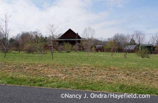 Hayefield mid-April 2016; Nancy J, Ondra