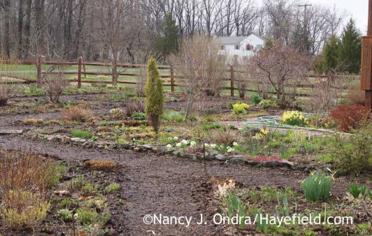 Front Garden - April 20, 2015; Nancy J. Ondra at Hayefield