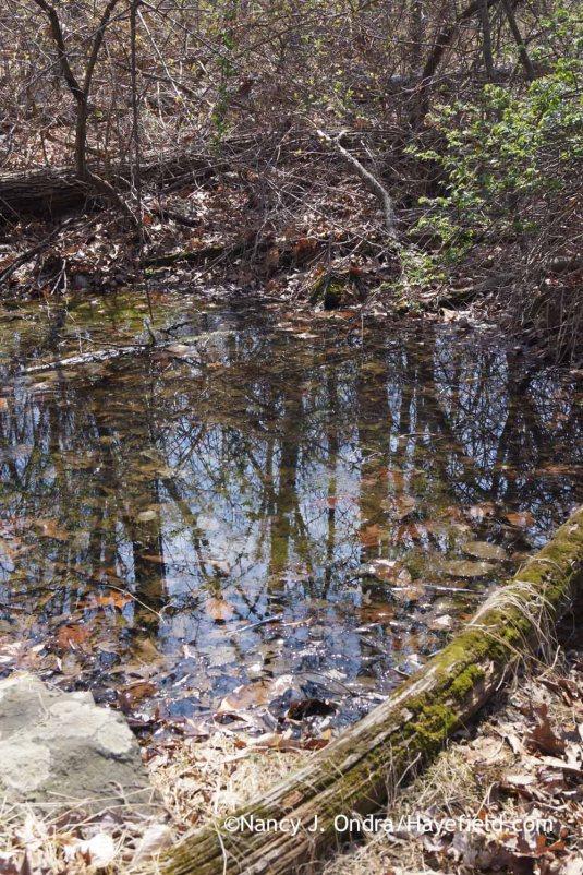 Vernal pool - Bucks County, PA; Nancy J. Ondra at Hayefield
