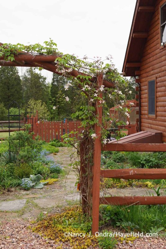 Courtyard arbor and path at Hayefield [Nancy J. Ondra]