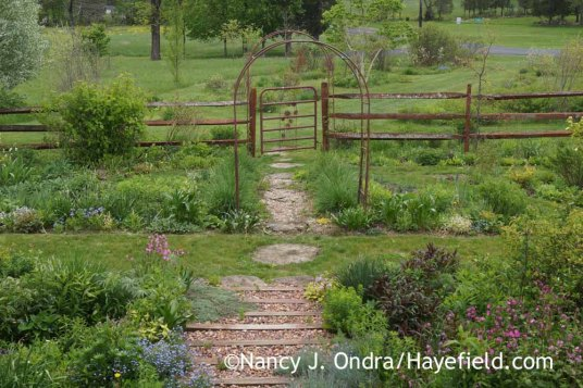 The side garden and The Shrubbery from the side steps at Hayefield [Nancy J. Ondra]