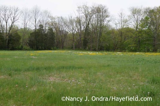 Wildflowers in lower field; Nancy J. Ondra at Hayefield