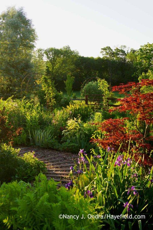 The side garden at Hayefield in early morning [Nancy J. Ondra]