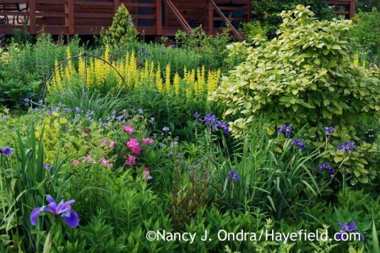 The Side Garden at Hayefield in June [Nancy J. Ondra]