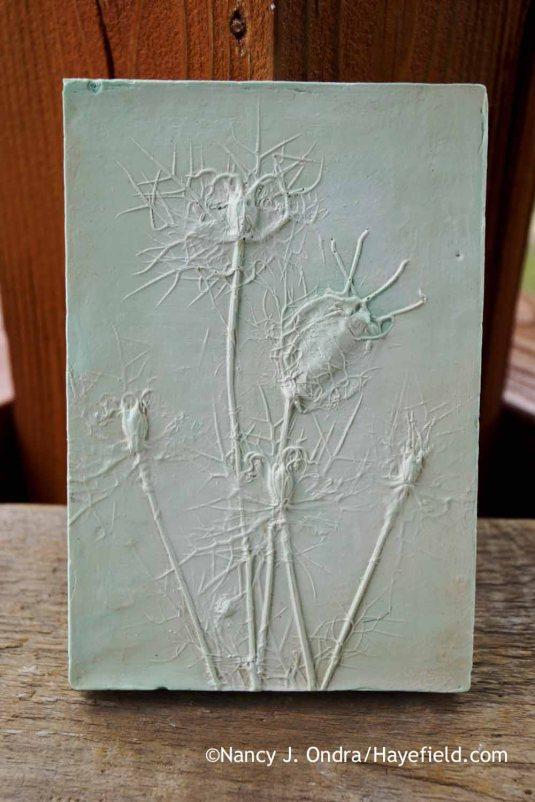 Love-in-a-mist (Nigella damascena) botanical casting [Nancy J. Ondra at Hayefield]