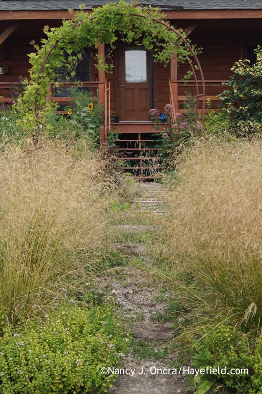 Tufted hair grass (Deschampsia cespitosa) and clematis arbor in the side garden at Hayefield [Nancy J. Ondra]