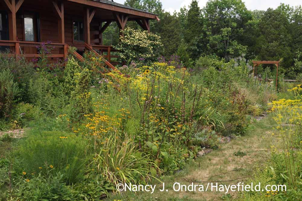 Garden Bloggers Bloom Day August 2016 Hayefield