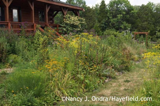 A bit more time spent on maintenance wouldn't go amiss, but there's not much incentive to putter around in the garden, other than to collect seeds. The grass paths are looking particularly dismal. [Nancy J. Ondra at Hayefield]