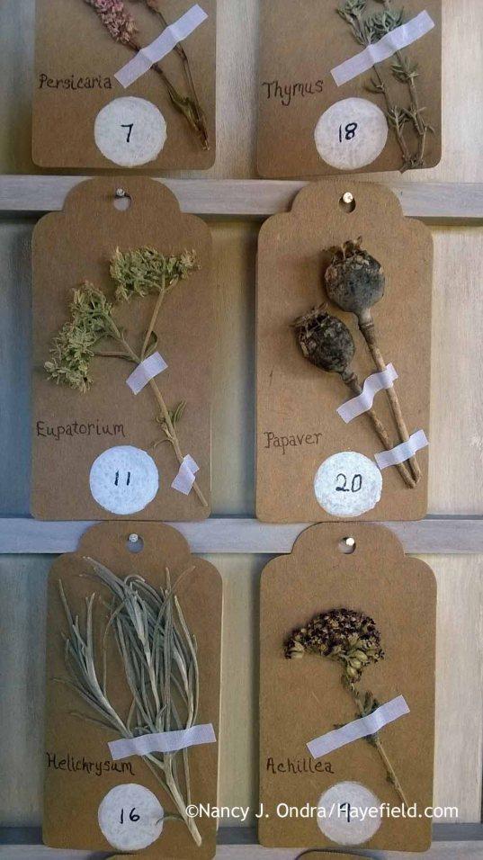 Botanical advent calendar detail [Nancy J. Ondra at Hayefield]