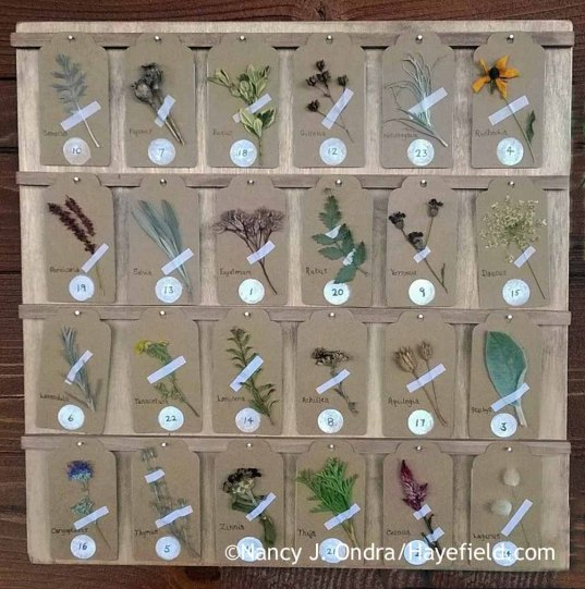 Botanical advent calendar [Nancy J. Ondra at Hayefield]