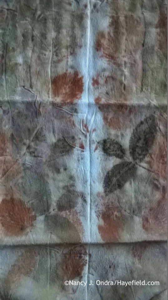 Eco printing on silk with leaves [Nancy J. Ondra at Hayefield]