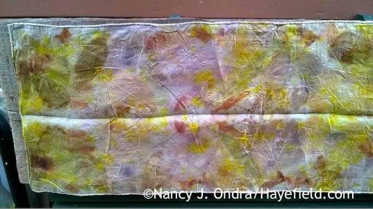 Eco printing on silk [Nancy J. Ondra at Hayefield]