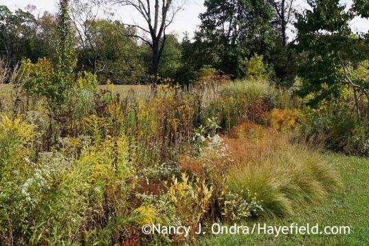 Perennials in The Shrubbery at Hayefield [Nancy J. Ondra at Hayefield]