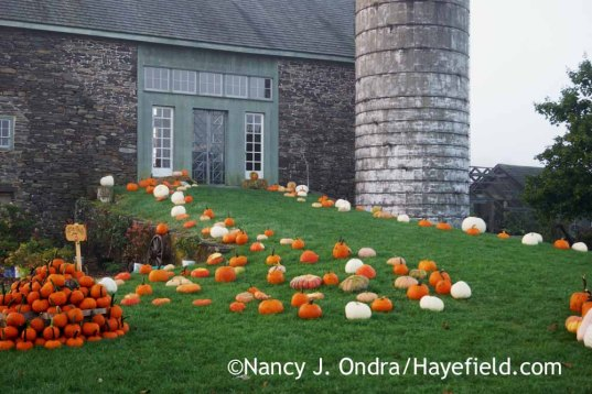 The Barn at Linden Hill Gardens in Ottsville, PA [Nancy J. Ondra at Hayefield]