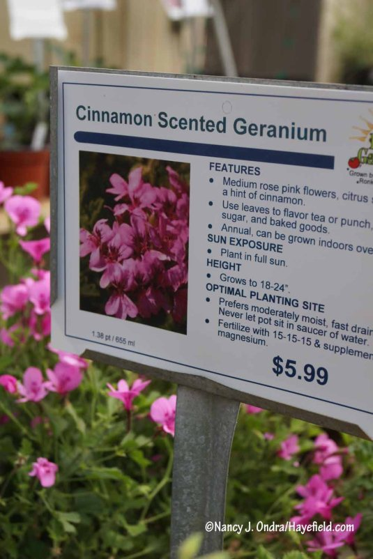 Scented geranium sign at Ken's Garden in Intercourse, PA