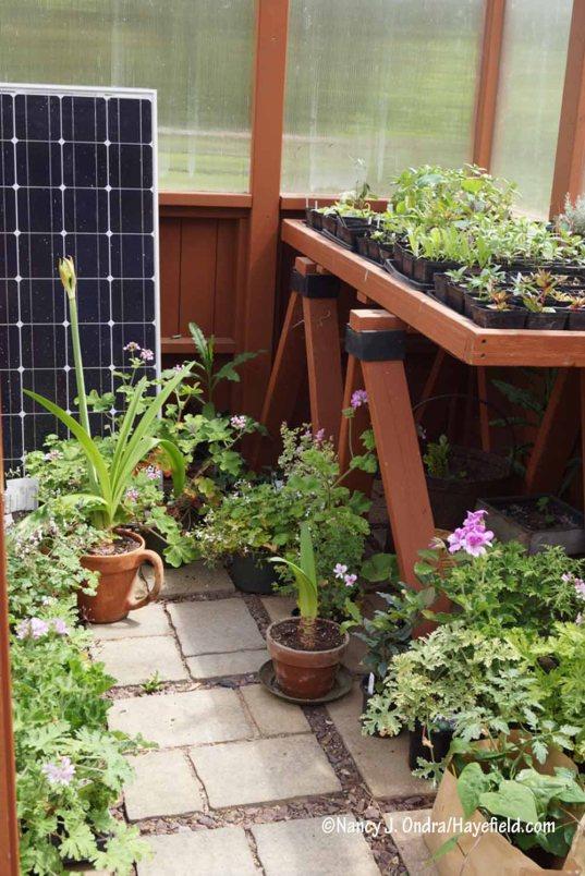 The greenhouse in spring [Nancy J. Ondra/Hayefield.com]