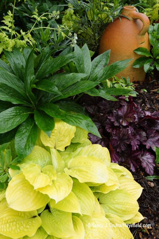 'Fire Island' hosta with hybrid hellebore (Helleborus x hybridus) and 'Dolce Blackberry Ice' heuchera [Nancy J. Ondra/Hayefield.com]
