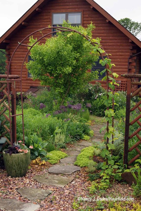 The courtyard path [Nancy J. Ondra/Hayefield.com]
