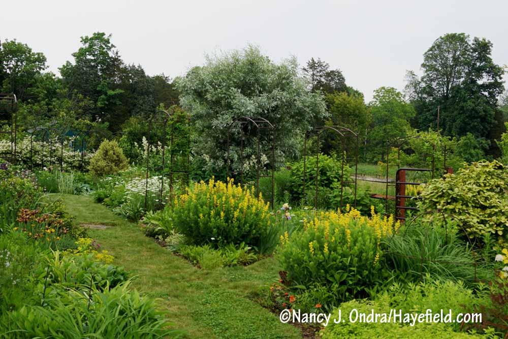 Garden Bloggers Bloom Day June 2017 Hayefield