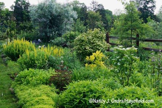 The yellow side of the Side Garden [Nancy J. Ondra/Hayefield.com]