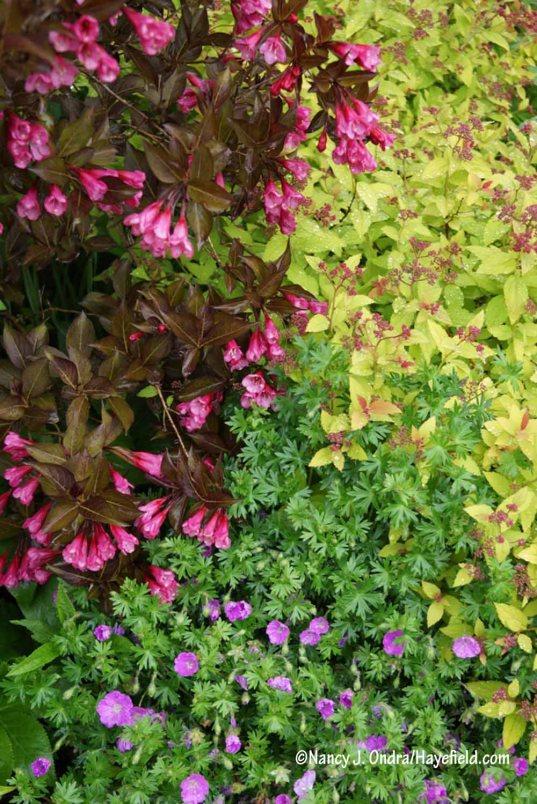 Wine and Roses weigela (Weigela florida 'Alexandra') with Magic Carpet spirea (Spiraea japonica 'Walbuma') and bloody cranesbill (Geranium sanguineum) [Nancy J. Ondra/Hayefield.com]
