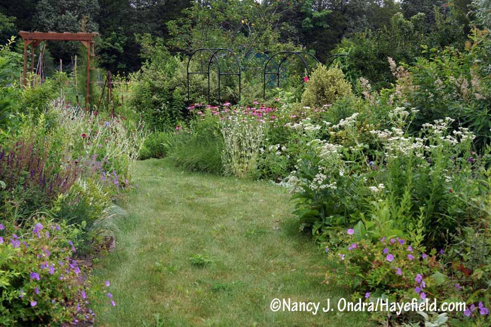 The Side Garden July 2017 [Nancy J. Ondra/Hayefield.com]