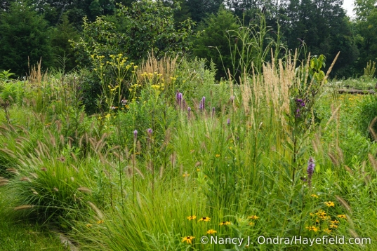 "The Perennial Meadow at Hayefield in August (rather redundant, considering all of the ""natural"" meadow just outside the fence, but it was an experiment I started several years ago and kept because it turned out so well) [Nancy J. Ondra/Hayefield.com]"