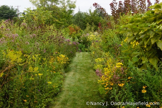 The front garden at Hayefield - September 2017 [Nancy J. Ondra/Hayefield.com]