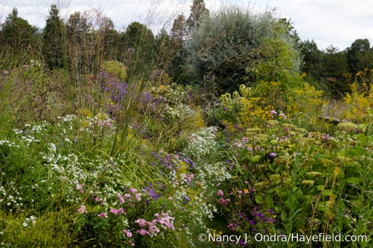 The Aster Path at Hayefield ~ October 2017 [Nancy J. Ondra/Hayefield.com]