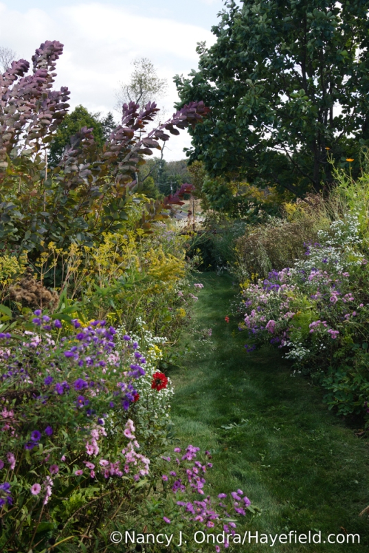 Front Garden Outer Path [Nancy J. Ondra/Hayefield.com]