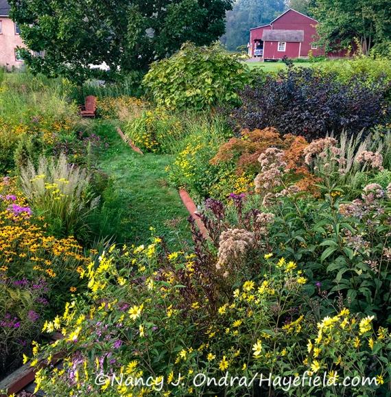 The Front Garden at Hayefield, September 6, 2019 [©Nancy J. Ondra/Hayefield.com]