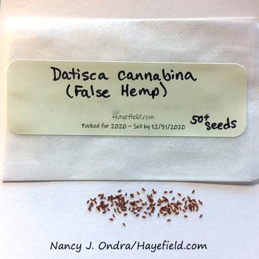 False hemp (Datisca cannabina) [Nancy J. Ondra/Hayefield.com]
