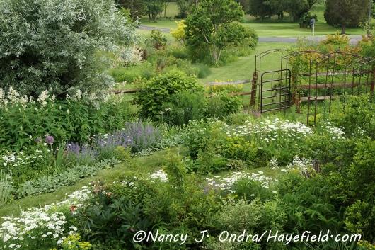 Orlaya grandiflora [©Nancy J. Ondra/Hayefield.com]
